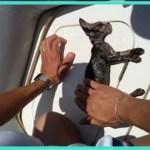 【感動】溺れて海に浮かんでいた子猫。湾岸警備隊の迅速な処置により、数分後に奇跡が起こる!【世界が感動!涙と感動エピソード】
