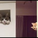 ひょっこり顔を出して覗いてくる猫ちゃんが可愛いくて癒される件w~The cat who peeks out with his face is cute and healed.