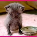【感動】大雨の中、路上を這っていた小さな動物…その正体は、生後間もない小さな子猫だった…【世界が感動!涙と感動エピソード】