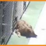 【感動】保護施設で1匹の犬がケージから脱走!!それにはとても心温まる理由があった…【世界が感動!涙と感動エピソード】