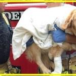 【感動】飼い主を守るため、自らの身を投げ出した盲導犬に称賛の声!更にお互いを思いやる飼い主と盲導犬の関係に胸が熱くなる…【世界が感動!涙と感動エピソード】