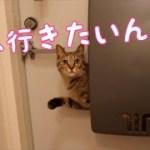 郵便受けからなにやら訴える子猫 [子猫][可愛い]