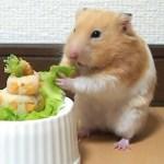 ケーキを作ってみたらまさかの結末に…おもしろ可愛い癒しハムスターI tried making a cake on a Funny hamster but in a sad ending ….