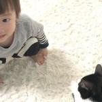 ネコちゃんと遊びたい!引っかかれてビックリのかなたくん😱【ココロマン普段の様子】