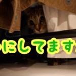 衣替えを邪魔する子猫が可愛い [子猫][可愛い]