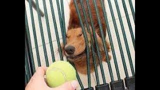 インターネット上で一番ホットなビデオ♥面白い動物♥犬、猫、動物の面白い瞬間#35