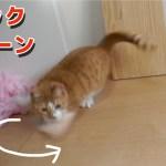 すごい速度でクイックターンする猫【すず/コテツ】