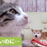 切ないけど可愛い💕 子猫と遊びたかったワンコ、願い叶わず…😭【PECO TV】
