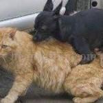 インターネット上で一番ホットなビデオ♥面白い動物♥犬、猫、動物の面白い瞬間#61