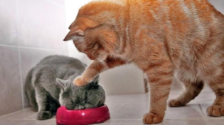 「かわいい猫」 笑わないようにしようとしてください – 最も面白い猫の映画 #266