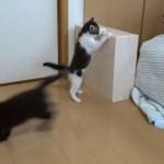 超かわいい、子猫のステップ