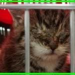 【感動】失明の危機に瀕し母猫に捨てられ、衰弱していた子猫。優しい女性の献身的な看護により回復し、愛らしい姿を見せる!【世界が感動!涙と感動エピソード】