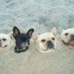 インターネット上で一番ホットなビデオ♥面白い動物♥犬、猫、動物の面白い瞬間#44