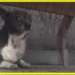 【感動】恐怖心で逃げ惑う野良犬。保護され辛い過去から解放されると本来の明るさで幸せを掴む!【世界が感動!涙と感動エピソード】