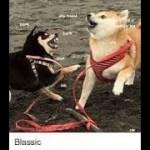 インターネット上で一番ホットなビデオ♥面白い動物♥犬、猫、動物の面白い瞬間#63