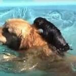 インターネット上で一番ホットなビデオ♥面白い動物♥犬、猫、動物の面白い瞬間#62