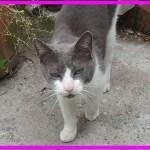 【感動】飼い主が亡くなって行方不明になった猫。10年後に飼い主の家族と愛に満ちた奇跡の再会!【世界が感動!涙と感動エピソード】