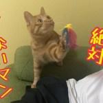 おもちゃを絶対に離さないかわいい子猫!