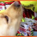 【感動】劣悪なシェルターで殺処分寸前だった犬。初めての「おもちゃ」選びで喜ぶ姿に感涙!【世界が感動!涙と感動エピソード】