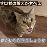 ご飯を残すロゼの猛抗議がとにかくスゴイ!!!
