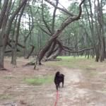 保健所から迎えた犬 おもしろい散歩道