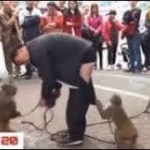 インターネット上で一番ホットなビデオ♥面白い動物♥犬、猫、動物の面白い瞬間#56