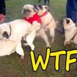 インターネット上で一番ホットなビデオ♥面白い動物♥犬、猫、動物の面白い瞬間#42