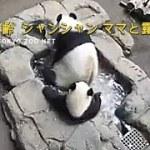 ☆ Cute Panda ☆ #32 ママと水浴びをするシャンシャンが可愛い