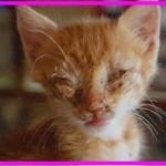 【感動】人間不信で衰弱した子猫。保護主さんの深い愛情で、再び瞳に輝きを取り戻す!【世界が感動!涙と感動エピソード】