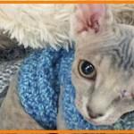 【感動】ブリーダーに見捨てられた片目を失った猫。辛い環境に耐え、愛に包まれた温かい暮らしを手に入れる!【世界が感動!涙と感動エピソード】