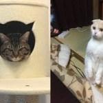 猫ちゃんとの暮らしの一瞬一瞬がじわじわと面白いw~The moment of living with a cat is interesting.