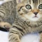 ずっと見ていても飽きない可愛い赤ちゃん猫の仕草