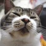 驚き!そんなところに座るか?って場所に居座る猫☆狛犬?シーサー状態の猫リキちゃん【リキちゃんねる 猫動画】Cat video キジトラ猫との暮らし