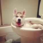 「絶対笑う」最高におもしろ犬,猫,動物のハプニング, 失敗画像集 #88