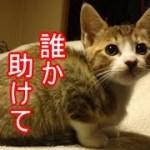 子猫は何故・・噛み付くようになったのか?ーかわいい子猫の秘密12
