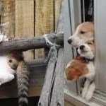驚きの場所で挟まっている猫と犬がじわじわ面白いw~Cats and dogs caught in amazing places are interesting.