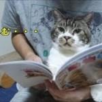 【かわいい♥】リキちゃん、ネコのなかま図鑑でお勉強する?本を見る猫☆マクドナルドハッピーセット・どうぶつの図鑑【リキちゃんねる 猫動画】Cat video キジトラ猫との暮らし