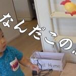 【ポンス成長日記】ポンス、びっくりチキンにビビることが発覚!