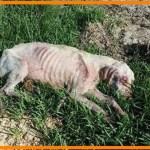 【感動】死んでいると勘違いするほど衰弱した犬。幸せを手に入れた瞬間の笑顔に心が締め付けられる…【世界が感動!涙と感動エピソード】