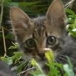 突然に可愛い子猫たちが現れた!母猫はどの子か悩む動画W