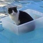 【面白い動画】 かわいい猫 – かわいい犬 – 最も面白いペットの動画 #27