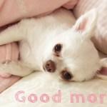 まだ眠い犬の寝起きはとっても可愛い!-Still sleepy dog's love makes me cute waking up!