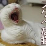 お尻大好きスケベな猫【面白い猫動画】スコティッシュフォールド