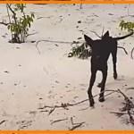 【感動】無人島に捨てられた犬。旅先でこの捨て犬と運命的な出会いをした男性は苦難を乗り越え自国へ連れ帰る!【世界が感動!涙と感動エピソード】