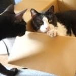 箱猫びっくり3連発