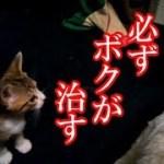 かわいい子猫が突然お家にやってきた-その時、先住猫達は・・・?!4週間目10-kitten came to our house 30