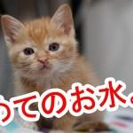 かわいい子猫に初めてのお水をプレゼントしてみたら・・・