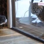 「かわいい猫」初めてタイガー, ライオンを見た猫の反応が面白すぎる