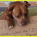【感動】引き取り手がなく5年間施設で過ごしてきたピットブル…保護施設のスタッフが取ったある行動が、この犬の運命を大きく変える!!【世界が感動!涙と感動エピソード】