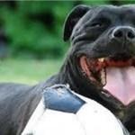 【感動】犬か激しく吠え、必死に水辺へと誘導する理由に驚きと涙・・【世界が感動!涙と感動エピソード】